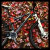 bike_in_leaves