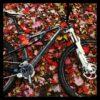 bike_in_leaves